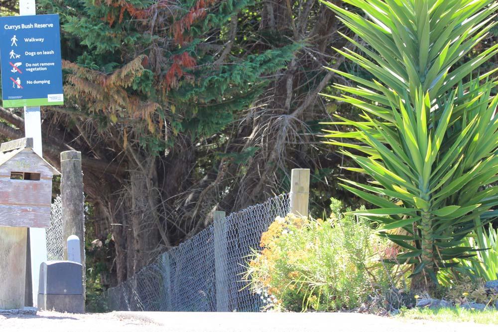 Free guided walk - Currys Bush